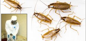 Détails sur le traitement des locaux de divers insectes: nuances importantes