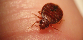 Les insectes peuvent être dangereux pour l'homme
