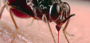 À propos des piqûres d'insectes et de leur traitement