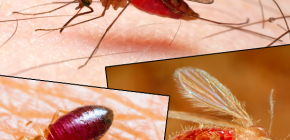 Morsures de différents types d'insectes et leurs photos