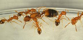 D'où viennent les fourmis dans la maison et faut-il en avoir peur