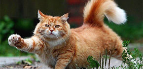 Comment éliminer rapidement et en toute sécurité les puces d'un chat