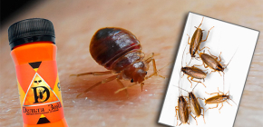 Remède contre les punaises de lit et les cafards Delta Zone: description et avis