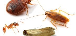 Comment combattre les insectes domestiques dans l'appartement