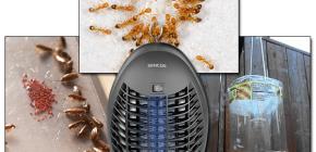 Examen des pièges efficaces pour les insectes volants et rampants