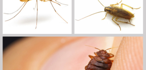 Insectifuges insectifuges à la maison: un examen des médicaments