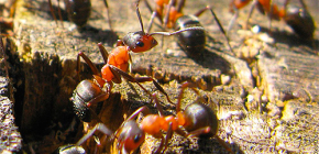 Comment les fourmis se préparent pour l'hiver