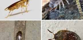 Les types d'insectes pouvant vivre dans l'appartement et leurs photos