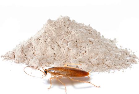 Poudres pour l'extermination de cafards: examen des moyens efficaces