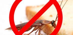 La destruction des insectes: conseils utiles et nuances importantes