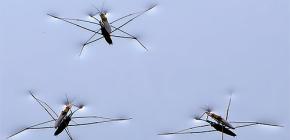 Détails de la vie bugs eau strider