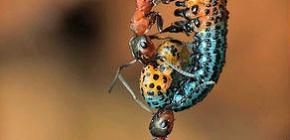 Combien pèse une fourmi et combien de poids peut-elle soulever?