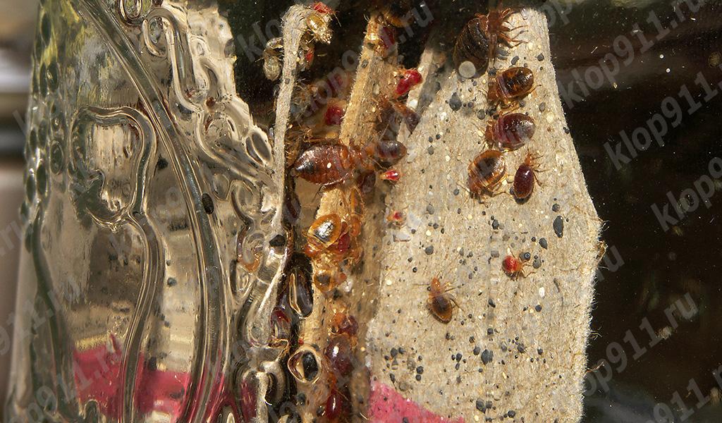 Individus d'âges différents dans le nid