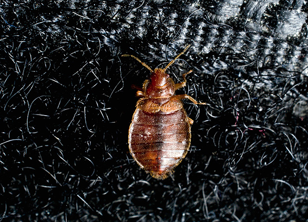 Gardez à l'esprit que les insectes peuvent être dans les vêtements.
