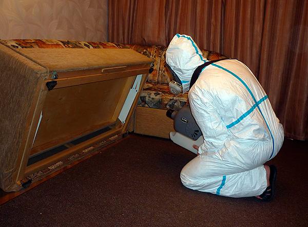 Si de nombreux appartements sont contaminés par des punaises de lit à la fois, il est conseillé de faire appel à un service de lutte contre les nuisibles afin de détruire simultanément les parasites dans toutes les chambres.