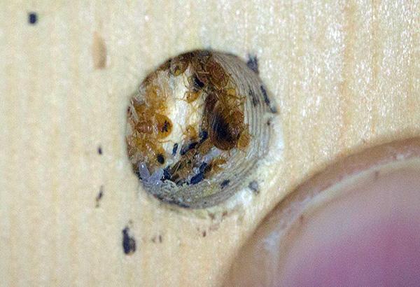 Cela ressemble à un nid typique de punaises de lit dans les meubles.