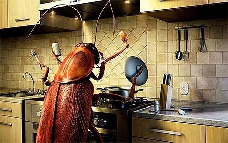 La propreté dans la cuisine et dans l'ensemble de l'appartement est la clé du succès de la lutte contre les cafards
