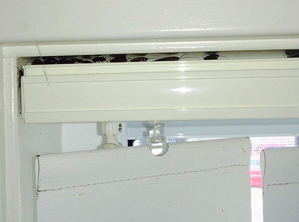 Les insecticides en pulvérisation pénètrent facilement même dans les endroits les plus reculés, où les blattes se cachent souvent.