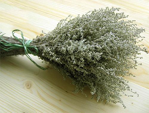 Branches d'absinthe - efficaces pour effrayer les puces