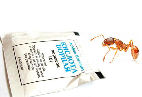 L'acide borique est un remède populaire efficace pour se débarrasser des fourmis domestiques.