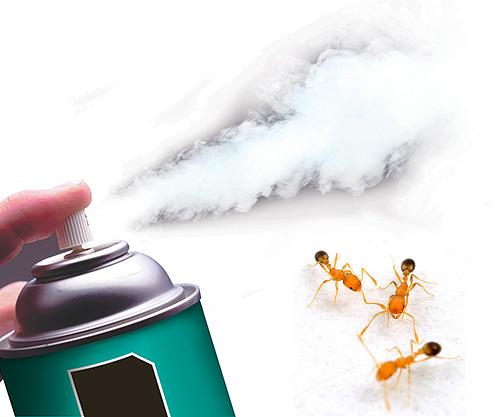 Il existe aujourd'hui des aérosols insecticides extrêmement efficaces qui détruisent rapidement les fourmis.