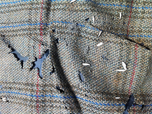 Chaque larve de papillon de nuit est un nouveau trou sur votre pull ou manteau préféré