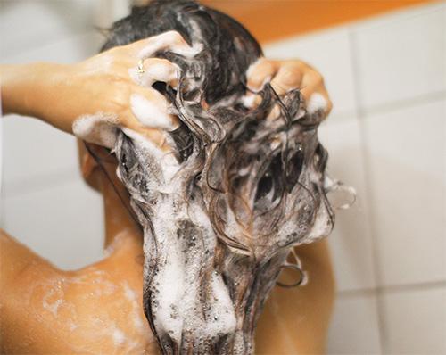 Les shampooings pédiculicides doivent être appliqués sur les cheveux mouillés.
