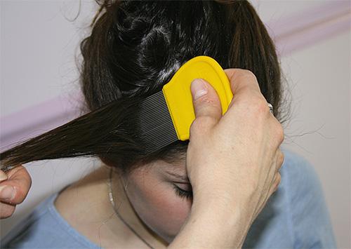 Après le traitement de la tête avec un spray ou un shampooing, peignez les poux avec un peigne spécial, mèche par mèche.