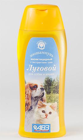 Le shampooing contre les puces est mieux appliqué avec un petit nombre de parasites sur le corps de l'animal