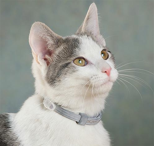 Les colliers anti-puces aident à protéger votre animal de compagnie des parasites