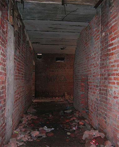 Assez souvent, les puces peuvent apparaître dans les appartements du sous-sol de la maison, où elles se multiplient en grande quantité.