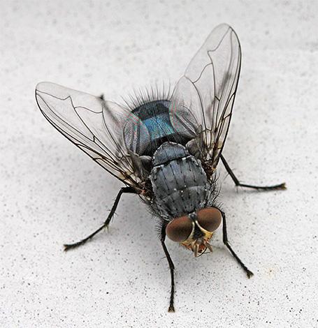 Et certains insectes que l'on peut trouver à la maison sont des invités aléatoires de la rue ici.