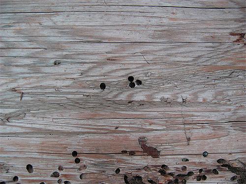 Les traces du broyeur de coléoptères