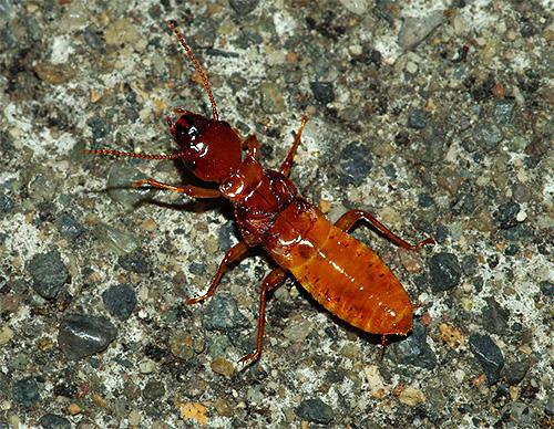 Les termites peuvent aussi parfois nuire à la maison d'une personne.