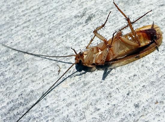 L'effet de barrière signifie que la zone Delta assure la mort de ces insectes provenant de voisins.
