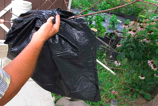 Sur le nid de frelons, suspendu à une branche, vous pouvez simplement mettre un sac contenant une solution de poison.