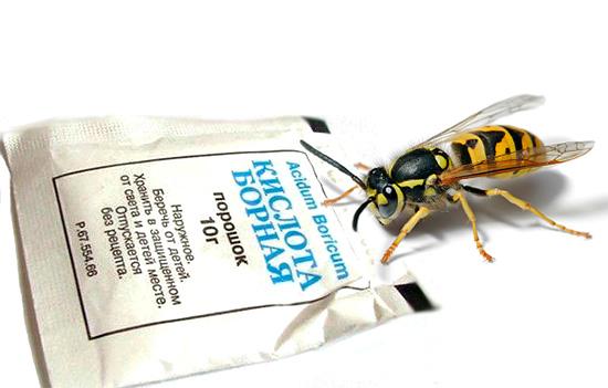 L'acide borique est efficace non seulement contre les cafards, mais également contre les guêpes.