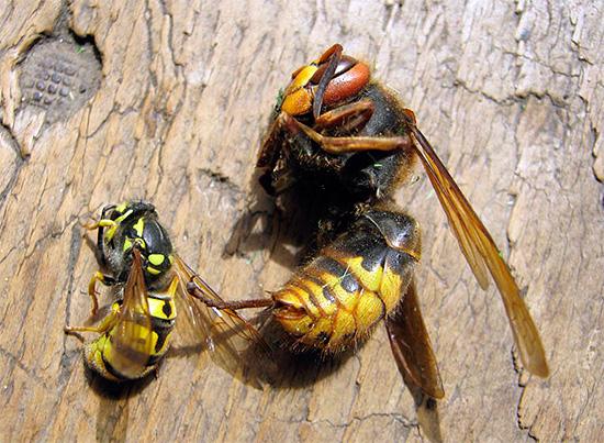 La plupart des insecticides modernes ont un large spectre d'action, détruisant presque aussi efficacement les guêpes, les frelons, les mouches, les fourmis et de nombreux autres insectes.