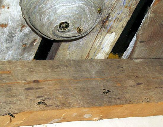 Le gel insecticide doit être appliqué sur les surfaces proches du nid.
