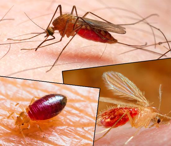 Les piqûres des différentes espèces d'insectes diffèrent considérablement les unes des autres par leur apparence, et les photos ci-dessous le montrent clairement ...