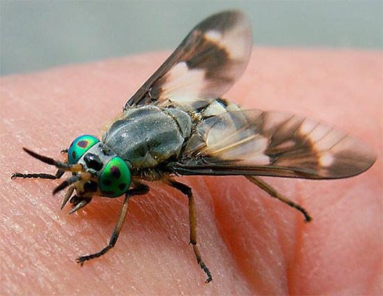 Et voici à quoi ressemble la mouche en train de saturer.