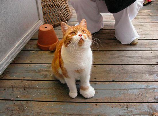 La morsure d'une guêpe chez le chat et le chien entraîne un gonflement de la zone touchée - tout comme chez l'homme.