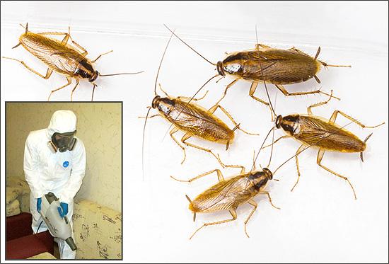 Si vous souhaitez commander le traitement de la pièce aux insectes (ou si vous souhaitez procéder vous-même à une désinsectisation), il est utile de commencer par en apprendre davantage sur cette procédure.