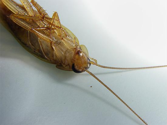 Les insecticides modernes agissent principalement sur le système nerveux des insectes, provoquant une paralysie et la mort qui en résulte.