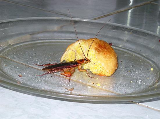 Avec un grand nombre d'insectes dans la maison, le traitement de la pièce doit être complexe, sinon l'effet peut être très faible.