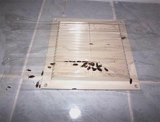 Les insectes peuvent pénétrer dans l'appartement par les passages de ventilation.