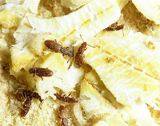 Si vous ne traitez pas d'insectes dans les entrepôts de produits alimentaires, ils peuvent causer de graves dommages aux stocks.