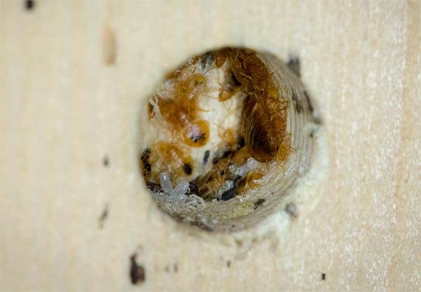 La fumée insecticide pénètre dans les plus petites crevasses et ouvertures où les insectes peuvent également se cacher.