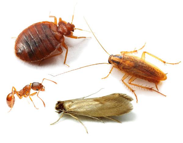 Nous découvrons comment lutter efficacement contre les insectes dans une maison, un appartement ou une maison de campagne en utilisant des méthodes modernes et des agents insecticides ...