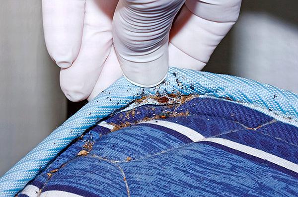 Les parasites sont restés viables, malgré le fait que le matelas ait été enveloppé de plastique pendant six mois.